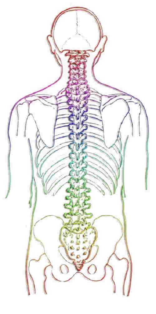 Anatomie de la colonne vertébrale